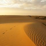 Coucher de soleil - Désert du Thar