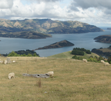 Banks Peninsula - Nouvelle-Zélande