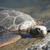 92. Galapagos - Jour 6 - Tortues