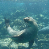 181. Galapagos - Jour 11 - Santa Fe -Snorkeling